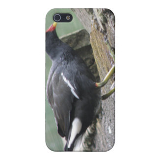 Moorhen  cover for iPhone SE/5/5s