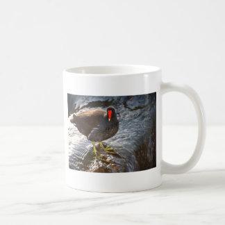 Moorhen in water coffee mug