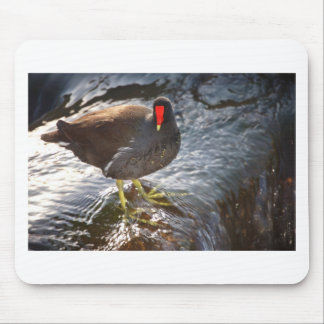 Moorhen in water mouse pad