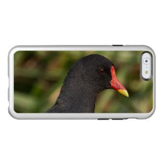 Moorhen Incipio Feather Shine iPhone 6 Case
