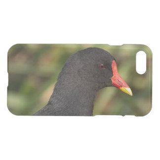 Moorhen iPhone 7 Case