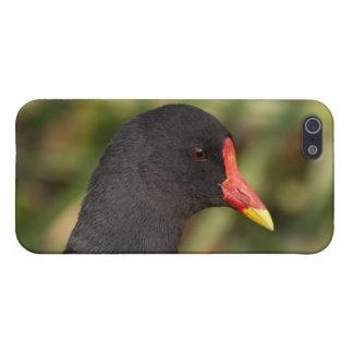 Moorhen iPhone SE/5/5s Cover