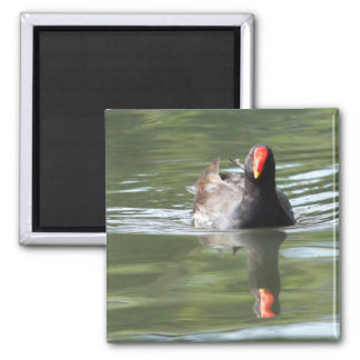 Moorhen 2 Inch Square Magnet
