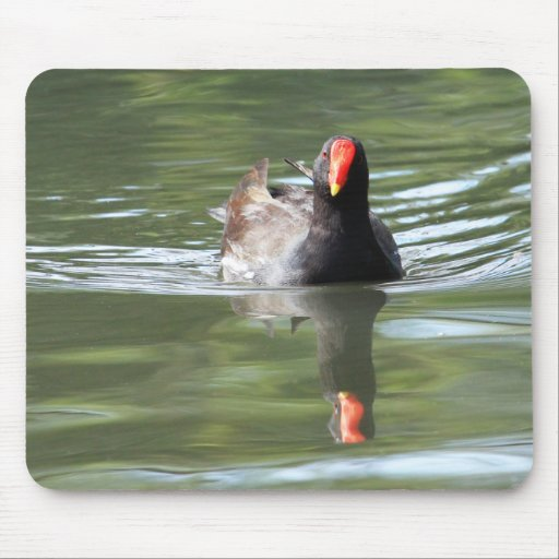 Moorhen Mouse Pads
