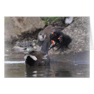 Moorhen with juvenile and chicks card