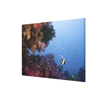 Moorish Idol Canvas Print