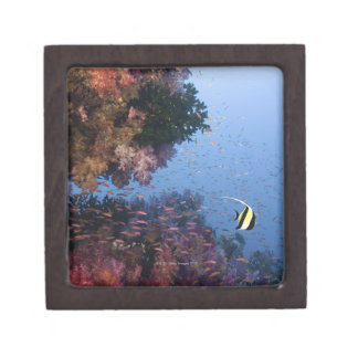 Moorish Idol Jewelry Box