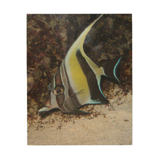 Moorish Idol Wood Wall Art