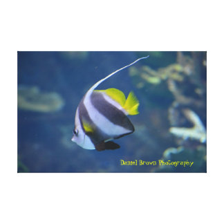 Moorish Idol Wrapped Canvas Photo