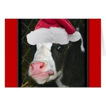 Moory Cow Christmas Card