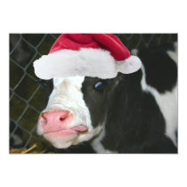 Moory Cow Christmas Card