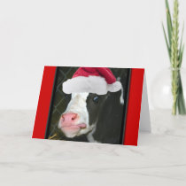 Moory Cow Christmas Holiday Card