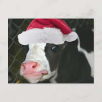 Moory Cow Christmas Holiday Postcard