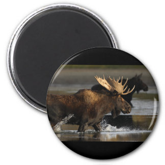 Moose 2 Inch Round Magnet