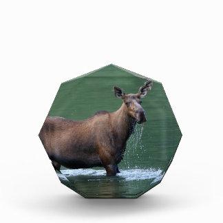 moose acrylic award