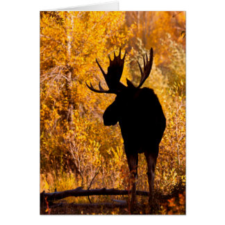 Moose (Alces Alces) Bull In Golden Willows 2 Card