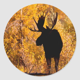 Moose (Alces Alces) Bull In Golden Willows 2 Classic Round Sticker