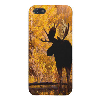 Moose (Alces Alces) Bull In Golden Willows 2 iPhone SE/5/5s Cover