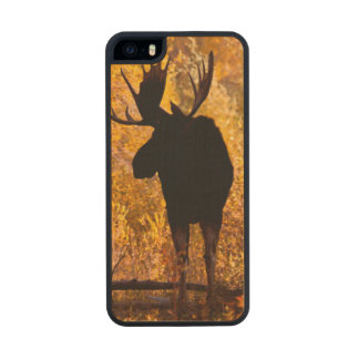 Moose (Alces Alces) Bull In Golden Willows 2 Wood Phone Case For iPhone SE/5/5s