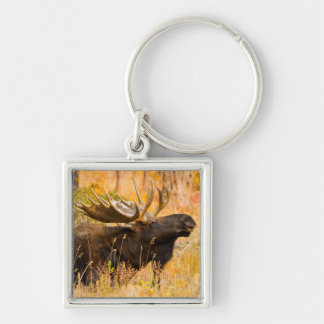 Moose (Alces Alces) Bull In Golden Willows Keychain