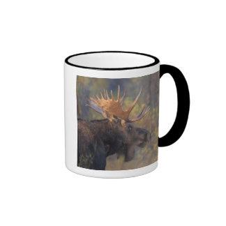 moose, Alces alces, bull in Grand Teton Ringer Mug