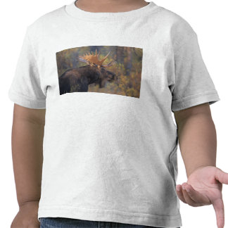 moose Alces alces bull in Grand Teton Tee Shirts