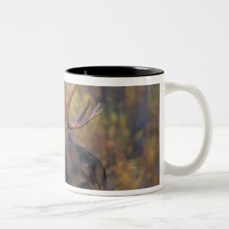 moose, Alces alces, bull in Grand Teton Two-Tone Coffee Mug