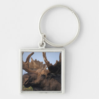 moose, Alces alces, bull with large antlers in 2 Keychain