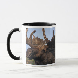 moose, Alces alces, bull with large antlers in 2 Mug