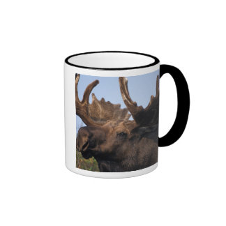 moose, Alces alces, bull with large antlers in 2 Ringer Mug