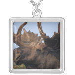 moose, Alces alces, bull with large antlers in 2 Square Pendant Necklace