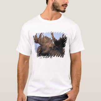 moose, Alces alces, bull with large antlers in 2 T-Shirt