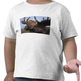 moose Alces alces bull with large antlers in 2 Tee Shirt