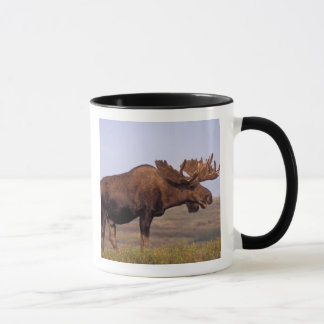 moose, Alces alces, bull with large antlers in Mug