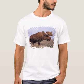 moose, Alces alces, bull with large antlers in T-Shirt