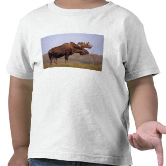 moose Alces alces bull with large antlers in Tee Shirts
