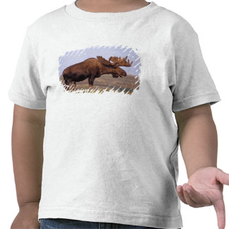 moose Alces alces bull with large antlers in Tees