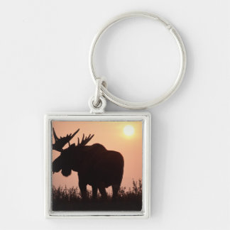 moose, Alces alces, bull with large antlers, Keychain