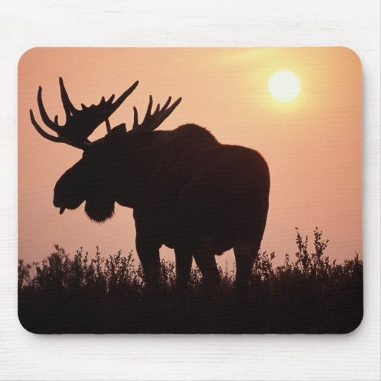 moose, Alces alces, bull with large antlers, Mouse Pad