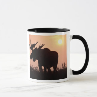 moose, Alces alces, bull with large antlers, Mug