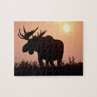 moose, Alces alces, bull with large antlers, Puzzle