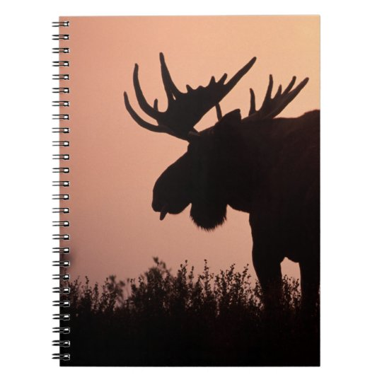 moose, Alces alces, bull with large antlers, Spiral Notebook