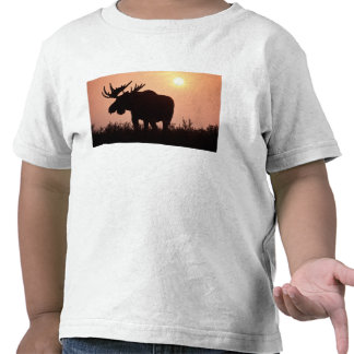 moose Alces alces bull with large antlers T Shirts
