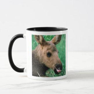 moose, Alces alces, calf lying in grass, Kenai Mug