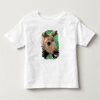 moose, Alces alces, calf lying in grass, Kenai T-shirts