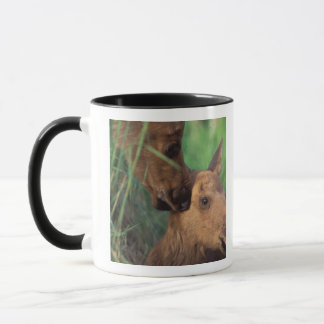 moose, Alces alces, cow with newborn calf, Mug