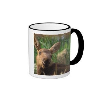 moose, Alces alces, newborn calf resting in Ringer Mug