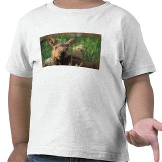 moose Alces alces newborn calf resting in T Shirts