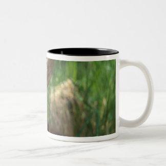 moose, Alces alces, newborn calf resting in Two-Tone Coffee Mug