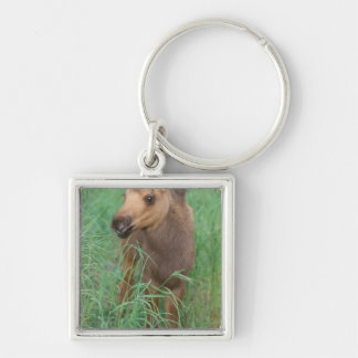 moose, Alces alces, newborn calf stands in 2 Keychain